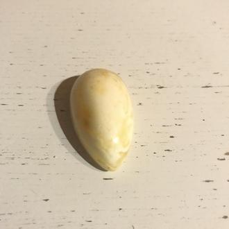 Бруштин білий
