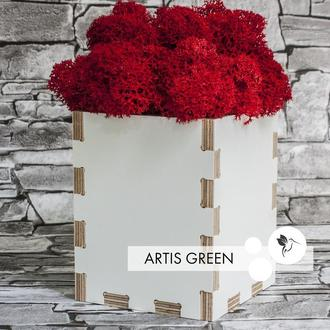 Экосувенир из окрашенной фанеры и стабилизированного мха Red Moss&White Wood