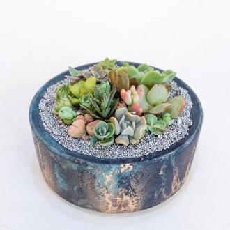 Флорариум в бетоне