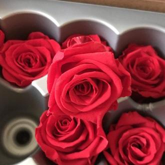 Роза стабилизированная, бутон красный 5,5см
