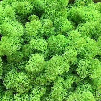 Стабилизированный мох, цвет: зеленое яблоко