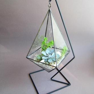 """Флорариум из суккулентов """"Голубой кристалл"""""""