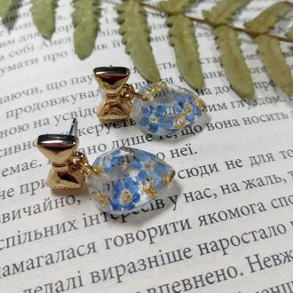 Сережки гвоздики с настоящими незабудками