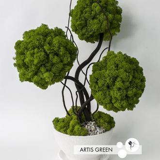 Дерево, топиарий из стабилизированного мха, трехствольное