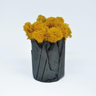 Оранжевый мох и бетонный горшок, отличный подарок на Новый год, подарок на 8е марта, сувенир