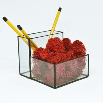 Стеклянный органайзер, карандашница (Мосариум) под карандаши, ручки и красный мох