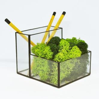Органайзер-мосариум для современного офиса под карандаши со мхом (микс)