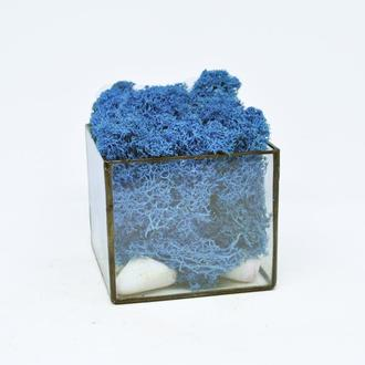 Стеклянный куб-мосариум с синим мхом, скандинавский синий мох, голубой мох