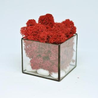 """Мосариум """"Куб"""" и красный скандинавский мох, Флорариум и красный мох, подарок на Новый год"""