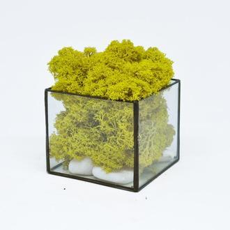 Флорариум (Мосариум) Куб и скандинавский желтый мох, подарок маме, подарок на Новый год