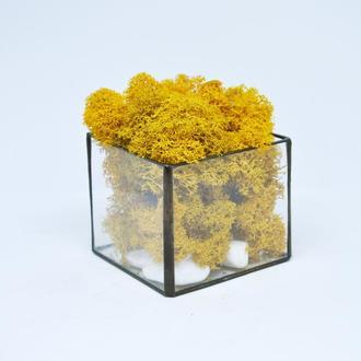 Куб из стекла и скандинавский оранжевый мох, подарок бабушке, подарок девушке, подарок маме