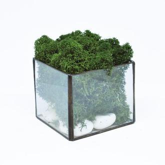 Куб из стекла и скандинавский темно-зеленый мох, отличный подарок на Новый год, подарок маме,