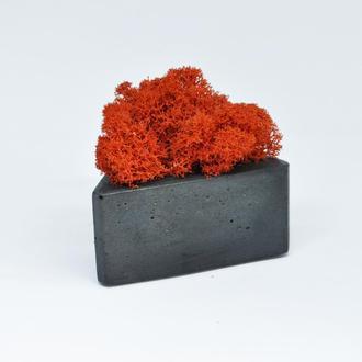 Горшок из бетона треугольной формы и красный скандинавский мох