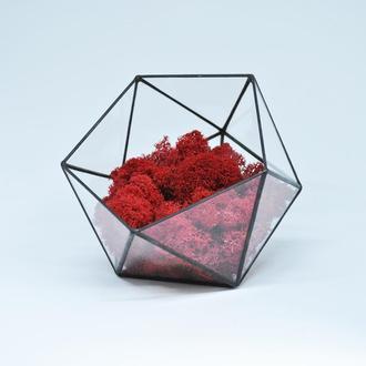 Флорариум икосаэдр маленький, мосариум и скандинавский красный мох