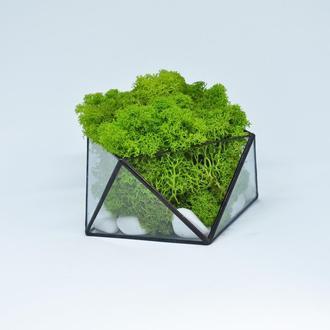 Мосариум геометрический и скандинавский мох