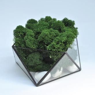 Мосариум геометрический и мох, подарок на новый год, подарок маме, подарок девушке