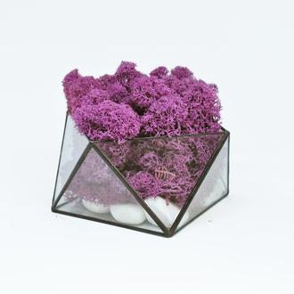 Фиолетовый мох и геометрический мосариум (флорариум) отличный подарок на Новый Год 2019