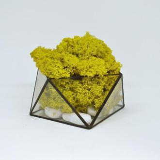Геометрический мосариум (флорариум) и желтый мох
