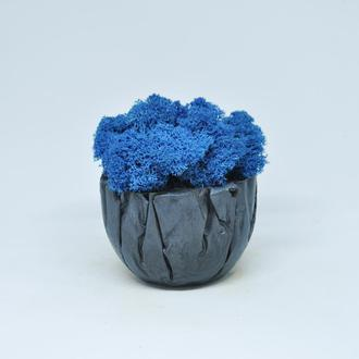 Скандинавский синий мох и бетонная чаша