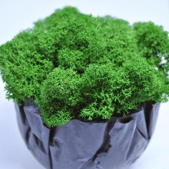 Зеленый мох и бетонный горшок отличный подарок на Новый год