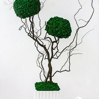 Эко-дерево, топиарий из скандинавского мха 1,3 м, двуствольное