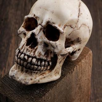 Череп декоративный человеческий с подвижной съемной нижней челюстью