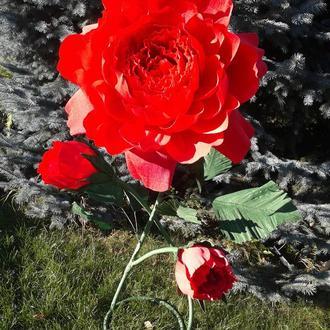 Ростовые цветы из гофрированной бумаги.
