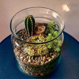 """Флорариум """"Flower jar"""""""