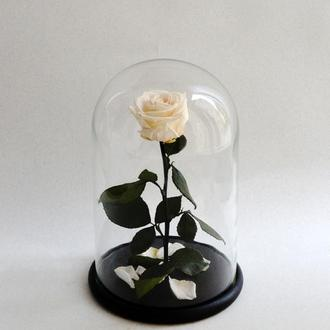 Стабилизированная роза в колбе. Коттоновый белый
