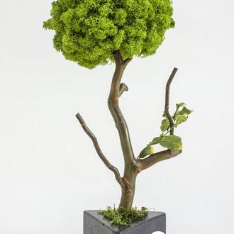 Эко-дерево из стабилизированного мха Fresh Wasabi, 30 cm