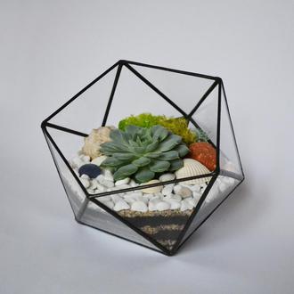 Флорариум Икосаэдр