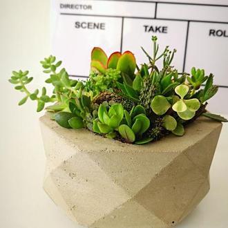 Композиция из суккулентных растений в бетонном кашпо