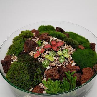 Мини садик в стекле, флорариум, фиттонии, мох.