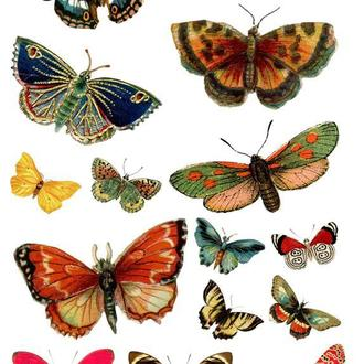 Декупажная карта Бабочка Бабочки Винтаж 39V 55 г/м2, А4, 210Х290 мм