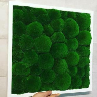 Картина из  природного стабилизированного мха