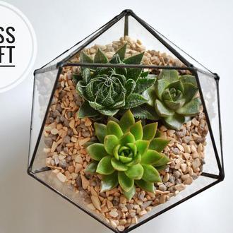 Флорариум геометрический