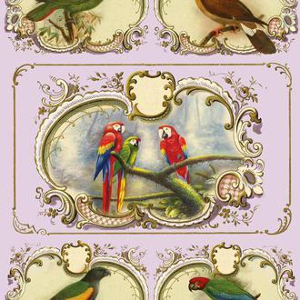 Декупажная карта Птицы Попугай Рамка Винтаж 116V 55 г/м2, А4, 210Х290 мм