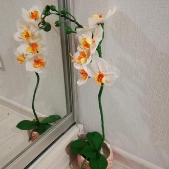 Орхидея холодный фарфор