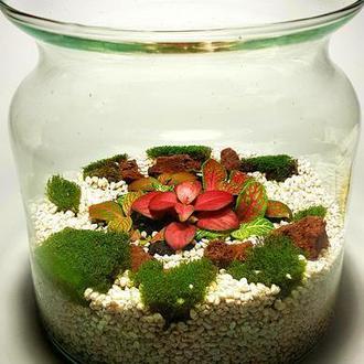 Мини сад в стекле, флорариум, фиттонии, мох.
