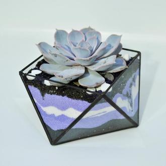 Флорариум геометрической формы и суккулент, Подарок на Новый год, подарок на 8 марта,