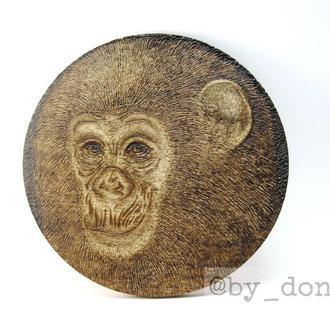 """Костер (подставка под чашку/кружку/бокал/стакан) """"Шимпанзе"""", выжигание, пирография по дереву"""