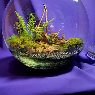 Мини сад в стекле, флорариум с папоротником.