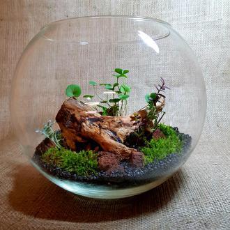 Флорариум, мини сад в стекле, цветок в колбе с корягой.