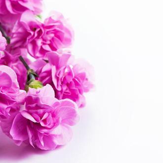 Виниловый фотофон малиновые цветы 40*40 см