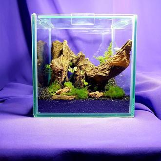 Флорариум - куб с корягой и барвинком.