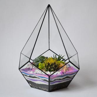 Флорариум Капля с живыми растениями.