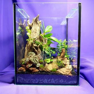 "Флорариум куб, мини сад в стекле "" Тропики""."