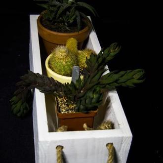 Кашпо, вазон для цветов и суккулентов