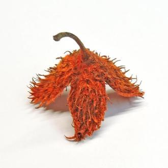 Шишка буковая натуральная, оранжевая