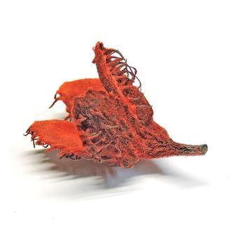 Шишка буковая натуральная красная